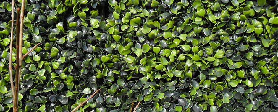 Siepi prezzi siepe finta piante rampicanti vendita siepe for Siepe artificiale bricoman